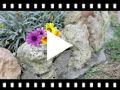 Video from Espadrilles fille à crochet