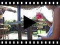 Video from Sandales fille nobuck et glitter