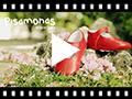 Video from Chaussures babies en cuir avec fermeture à boucle pour bébés