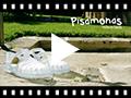 Video from Sandales en plastique classiques avec boucle