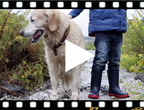 Video from Bottes de pluie Enfants Splash Tricolores